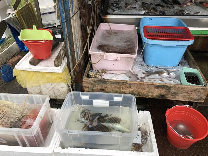 日下鮮魚店生簀
