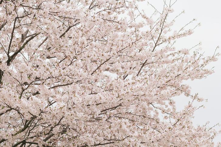 松山市の春