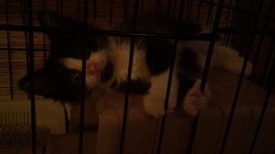 猫風邪の子猫