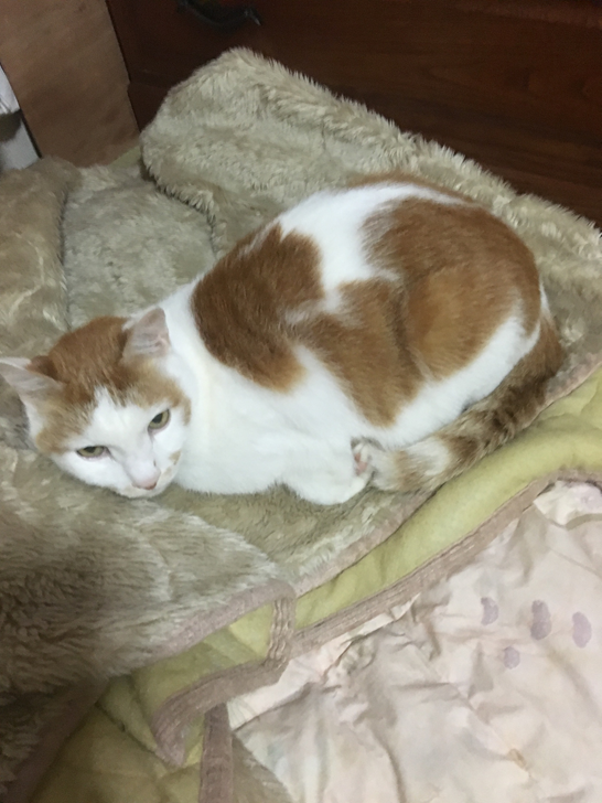 高齢の猫1