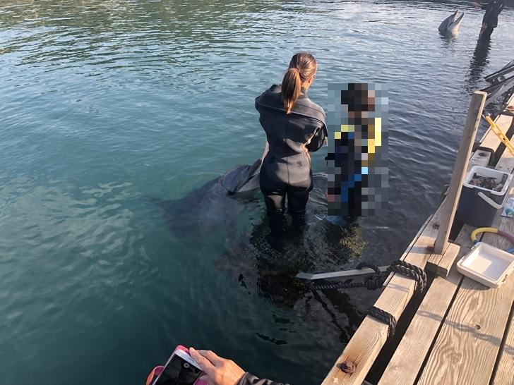 イルカに触る