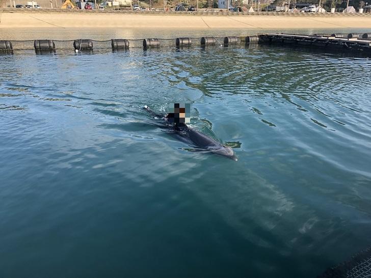 イルカとスイミング