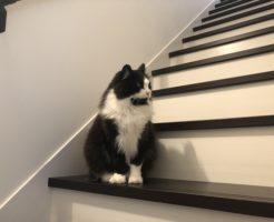階段タキシードキャットパターン