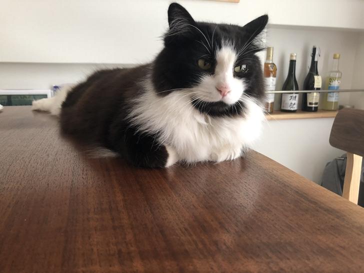 無垢一枚板と猫