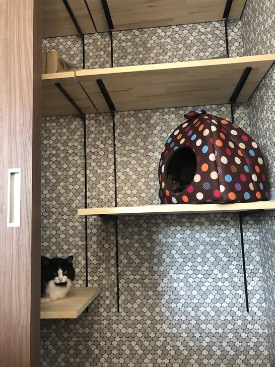 クローゼットと猫