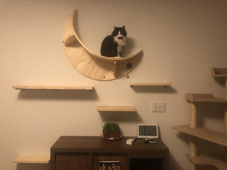 猫が好む照明