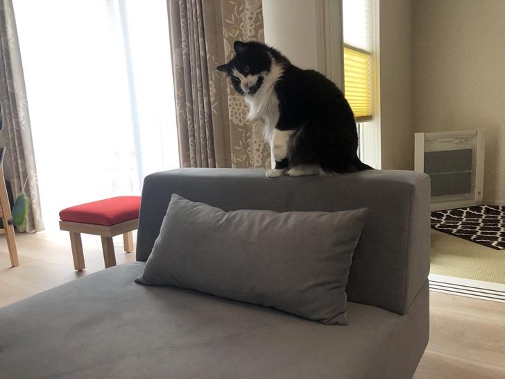 猫とソファー