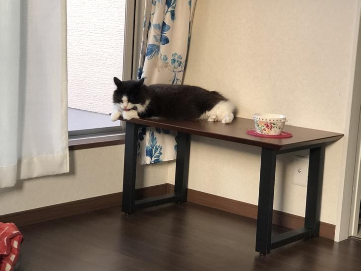 猫とローテーブル